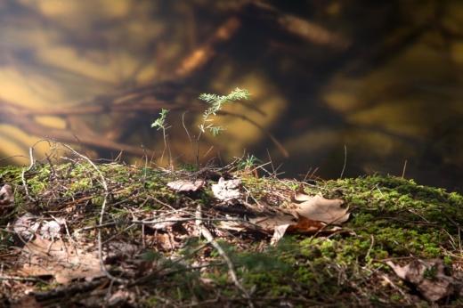leaves, water